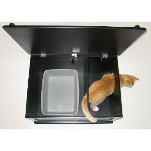 Cat Litter Box Dangerous Pregnant
