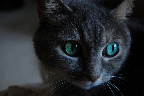 Image Result For Realistic Tabby Cat