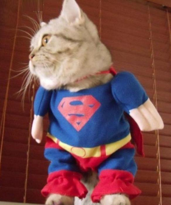 Funny Cat Costume Pictures