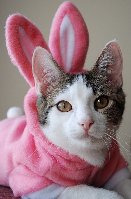 Happy Kitty Bunny Pony By Charles S Anderson Design Co