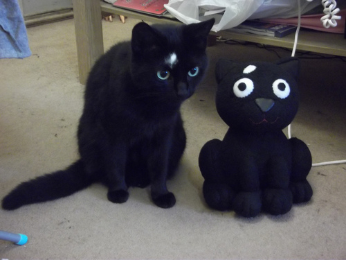 iz-this-my-twin-cats-kitten-kitty-pic-picture-funny-lolcat-cute-fun-lovely-photo-images