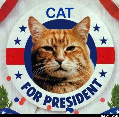 Cat_Presidents_Day