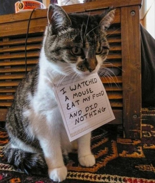 Funny-Cat-Pictures-with-Captions-23