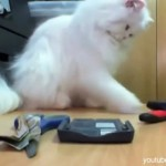 Gatos tirando cosas | Videos de gatos