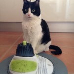Productos chulis para gatos: Centro de Masajes para gatos Catit Massage Center