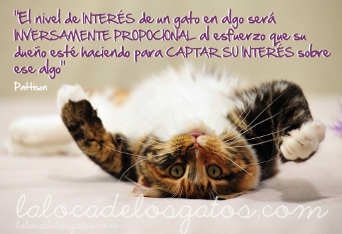 Citas de gatos: interes