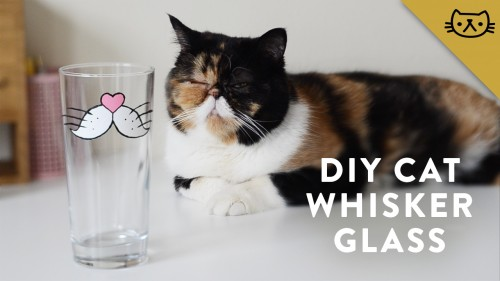 pudgeityourself--0011--diy-painted-cat-whisker-glass--large.thumb