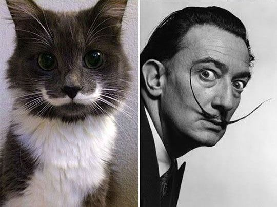 Salvador Dali Cats Picture