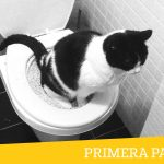 Mi experiencia con el WC para gatos: Primera Parte