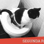 Mi experiencia con el WC para gatos: Segunda Parte