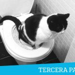 Mi experiencia con el WC para gatos: Conclusiones (Parte Tercera)