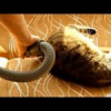 Videos de gatos: Aspirando al gato
