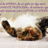 Citas de gatos: Interés