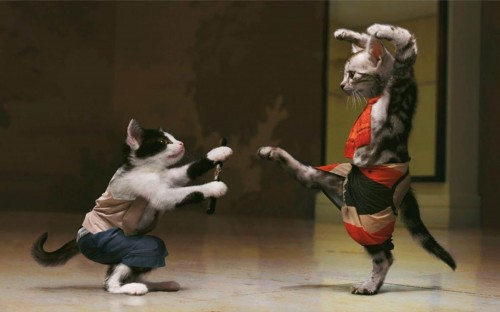 Funny-Cats-Fight-Wallpaper