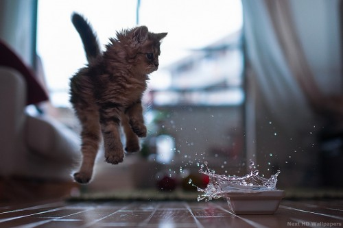 Funny-Cats-HD-Wallpapers