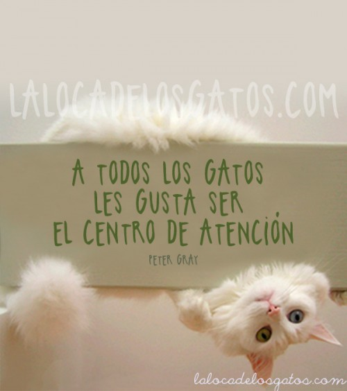 cita-gatos-atencion