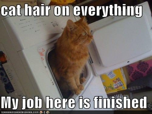 cat-hair-on-everything